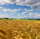 """UN NEGOCIO """"AL AIRE LIBRE"""". En el sector agrícola, la naturaleza marca el paso. La importancia radica en comunicarlo con claridad."""